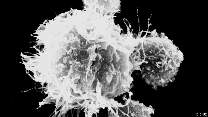 لقاح ضد الاسرطان: خلايا المناعة (تظهر في الوسط) تقوم بتوجيه خلايا تي (تظهر على الحافة) لقتل الخلايا السرطانية.