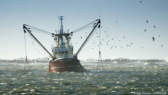 A fishing trawler at sea (Copyright: Eric Gevaert)