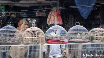 برخی از حیوانات وحشی، مخصوصا پرنده ها در بازارهای افغانستان آزادانه فروخته می شوند.