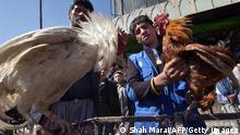 Vogelmarkt in Kabul Afghanistan ARCHIVBILD