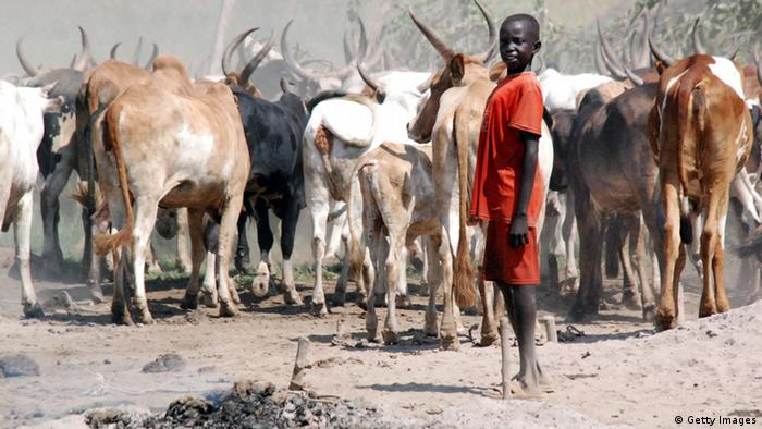 A south Sudanese boy tends to his cattle
