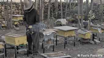 A beekeeper inspects new beehives in the Wukra region in the north of Ethiopia. (Copyright: Paolo Panzera)