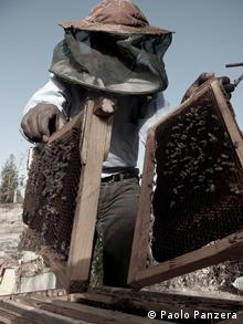 A beekeeper in Wukro removes honeycombs from a beehive (Copyright: Paolo Panzera)