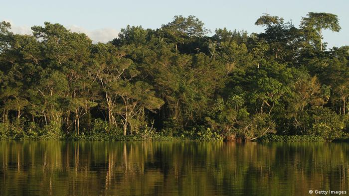 View of the jungle at the Limoncoha lake, next to the Yasuni Ecuadorean National Park, in the Orellana Province,Ecuador, on June 16, 2012. The Yasuni National Park contains Ecuador's largest oil reserves, but its exploitation would imply impacts to pristine ecosystems, particularly watersheds. In 2007, the government of Rafael Correa offered the proposal of not allowing extraction of the Ishpingo-Tambococha-Tiputini (ITT) oil fields in Yasuni, if the world community compensates to leave the oil permanently in the ground.Ecuador will propose at the Rio+20 summit the environmental project, launched in 2010 to prevent the extraction of 846 million barrels of crude oil from the Amazonian Yasuni rainforest, after the country obtained a contribution from international donors of 116,9 million US dollars this first year. AFP PHOTO/Pablo COZZAGLIO (Photo credit should read PABLO COZZAGLIO/AFP/Getty Images)