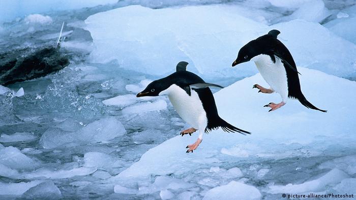 Adélie penguins. Photo credit: picture-alliance/Photoshot.