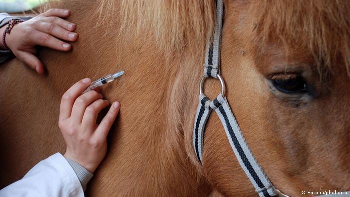 Horse getting a jab