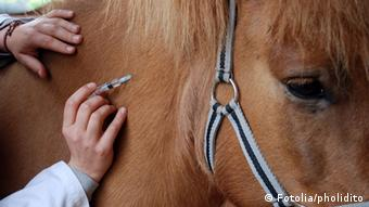 A person in a medical coat is giving a shot to a brown horse (Photo: pholidito)