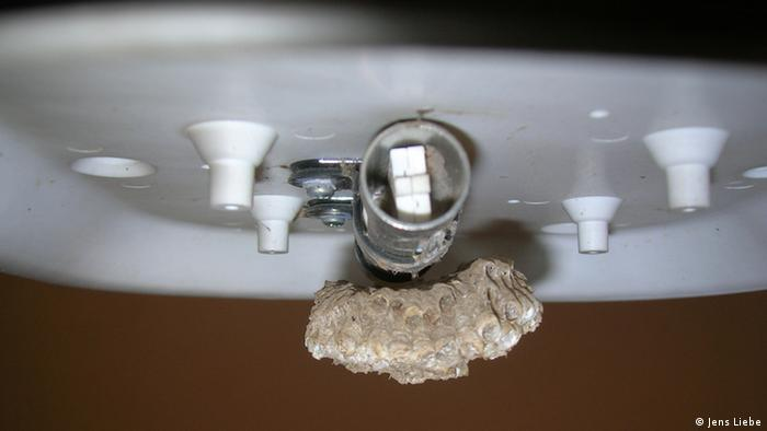 a standard temperature sensor that became unusable because wasps built a nest around it. This is a typical problem in Africa and implies it is not a good idea to have open structures/cavities. (Courtesy: Jens Liebe)