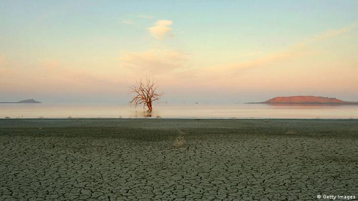 A tree killed by rising salt water is seen beyond a mud flat at dawn on the east shore of the Salton Sea (photo: David McNew/Getty Images)
