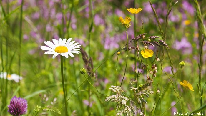 Un campo de flores silvestres.