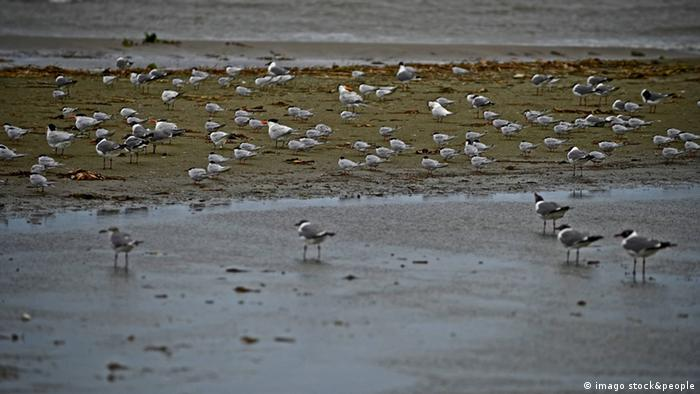 birds at seashore Photo: imago stock&people