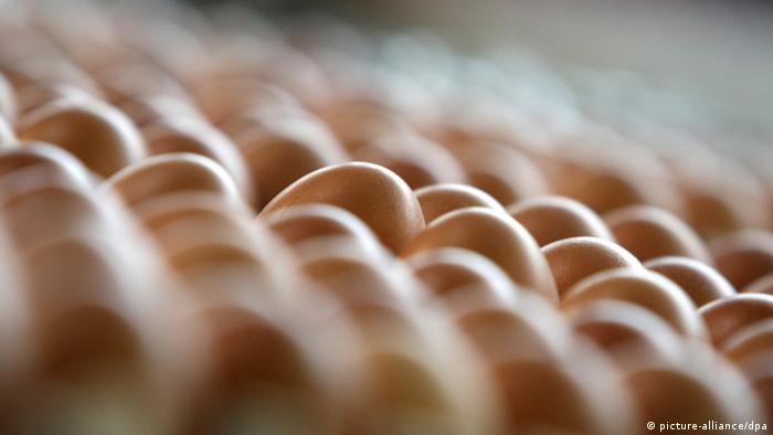 Eier in Paletten. (Foto: Karl-Josef Hildenbrand/dpa)