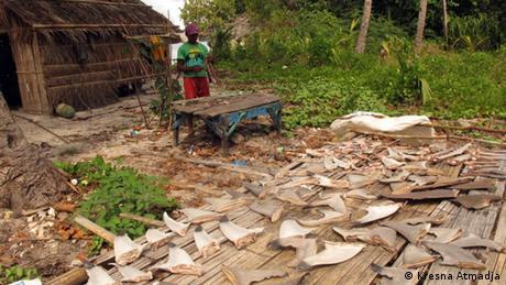 Haifischflossen- Handel Indonesien