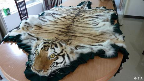 Tiger skin on a sofa