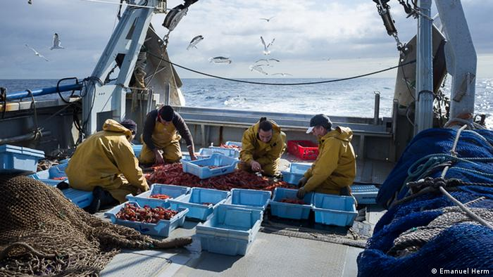 Ribari na brodu sortiraju ulov