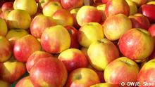 rot-gelbe Äpfel