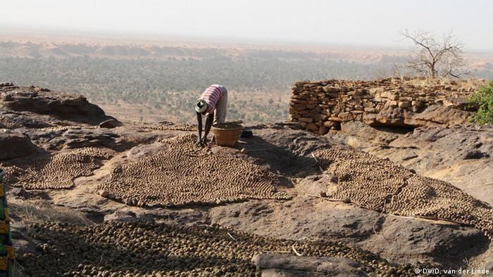 A woman prepares dried onions on a cliff overlooking the Dogon Plains