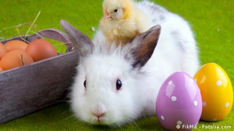 Ein Hase sitzt neben gefärbten Eiern