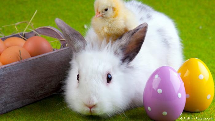 Easter eggs and a bunny Copyright: FikMik - Fotolia.com