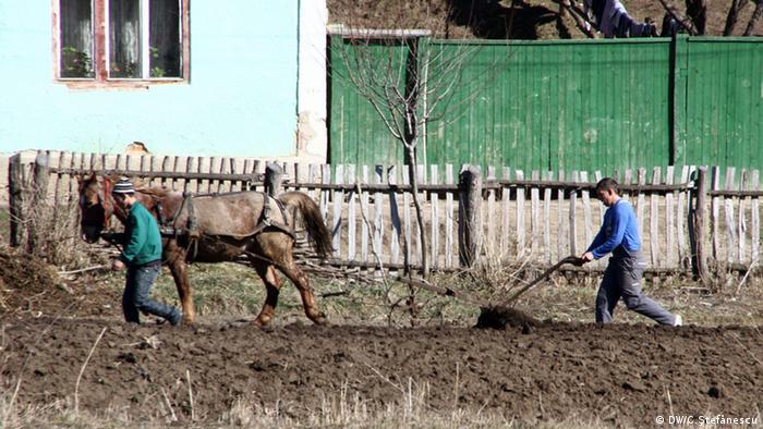 Rumänien - traditionelle Landwirtschaft (DW/C.Ştefănescu)