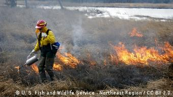 A biologist wearing a protective suit walks through a burning field (Foto: U. S. Fish and Wildlife Service - Northeast Region