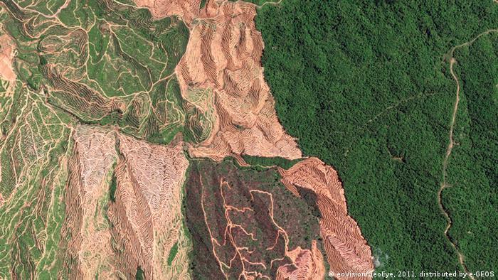 Der zu großen Teilen abgeholzte tropische Regenwald in der malaysischen Provinz Sarawak (Foto: eoVision/DigitalGlobe)