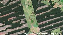 Forstplantagen im neuseeländischen Christchurch (Foto:
