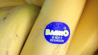 Bananas with an 'Ecuador' sticker
