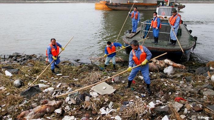 Cleaning workers retrieve the carcasses of pigs from a branch of Huangpu River in Shanghai, March 10, 2013. Over 2,200 pigs have been found dead in one of Shanghai's main water sources, official media reported on March 11, 2013, triggering a public outcry in China where concerns over food safety and environmental pollution run high. Picture taken March 10, 2013. REUTERS/Stringer (CHINA - Tags: ENVIRONMENT ANIMALS SOCIETY)