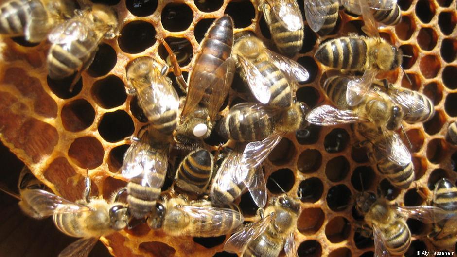 Ibama investiga ação dos agrotóxicos neonicotinóides e seus efeitos sobre o organismo das abelhas