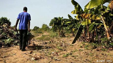 Bukina Faso Ouagadougou Obstbauer Mando Adayo Burkina Faso möchte zum Agrar-Exporteur aufsteigen. Seit den 1990er Jahren konnte Burkina Faso seine landwirtschaftliche Produktion verdoppeln. Vor allem durch verbesserte Bewässerungsmethoden ist weiteres Wachstum möglich, sagen Experten. Entscheidend ist zudem der Zugang zu Märkten. Ein Ansatz: Bauern vermarkten ihre Produkte gemeinsam in Genossenschaften und können so bessere Preise erzielen. DW/ Peter Hille