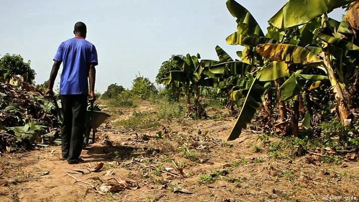 Burkina Faso fruit farmer Mando Adayo