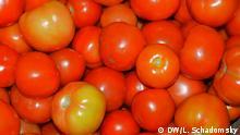 Bildergalerie Bioanbau in Uganda Bio-Tomaten