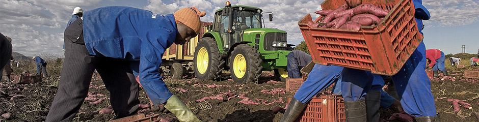 --- 2013_03_20_TH_afrika_landwirtschaft.psd