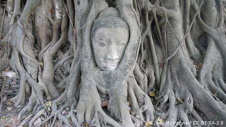"A Buddha head surrounded by the roots of a sacred fig tree at the Wat Mahathat temple in Thailand. Known as the ""Bodhi"" or wisdom tree, the sacred fig has a special significance in Buddhism because Siddhartha Guatama – the religion's founder – attained enlightenment while meditating under one"