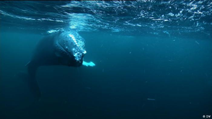 Wale Norwegen