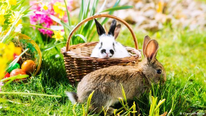 Ostereier und Hasen