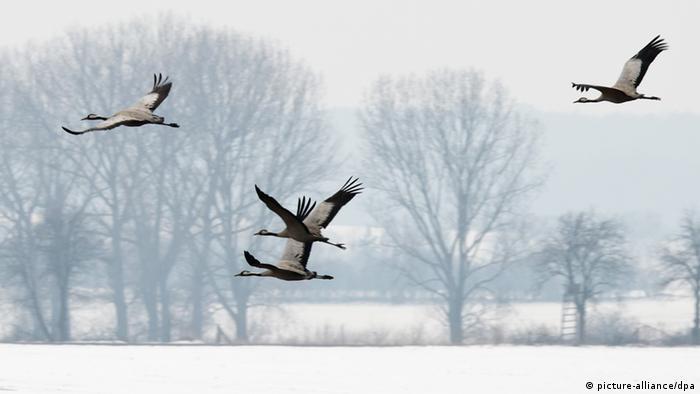 وفاداری جنسی با زندگی جمعی پرندگان ارتباط دارد