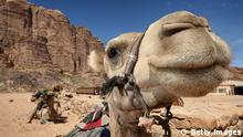 PETRA, JORDAN - OCTOBER 12: Camels sit waiting to be ridden by tourists in Wadi Rum on October 12, 2008 in Petra, Jordan. The sandstone in the region has given rise to unique rock formations, rising from the desert, forming deep canyons and fissures. Tourists from all around the world flock to the ancient city of Petra, built during the fifth and sixth centuries BC, Petra is the ruined capital of the Nabatean Arabs. Its immense façades were lost for almost 1000 years until they were rediscovered by the Swiss traveller Johan Ludwig Burckhardt in 1812. Luxury tourism in the region is booming and set to continue with rumours of budget carriers such as Easyjet set to make nearby Aqaba a future destination. (Photo by Chris Jackson/Getty Images)