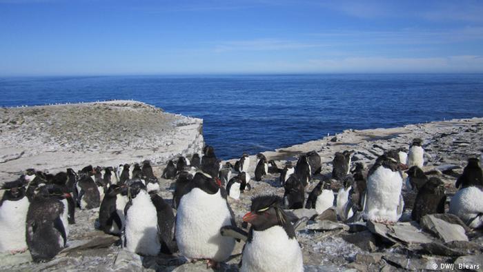 Penguins on rocks Foto: DW/James Blears, Falklands, March 2013