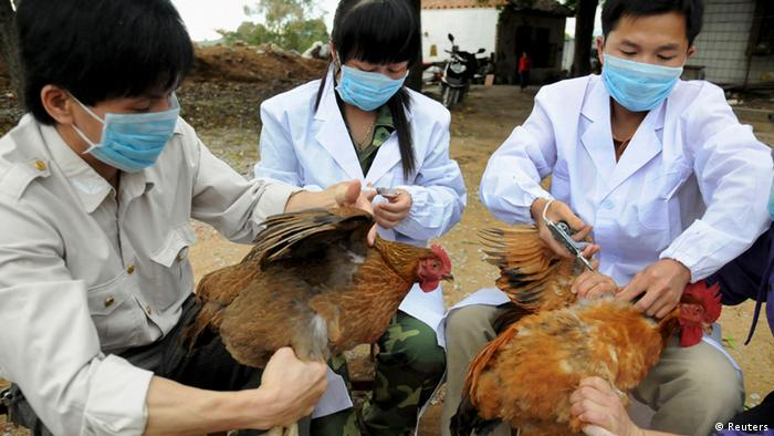 Technical staff from the animal disease prevention and control center inject chickens with the H5N1 bird flu vaccine in Shangsi county, Guangxi Zhuang autonomous region, April 3, 2013. Picture taken April 3, 2013. REUTERS/China Daily