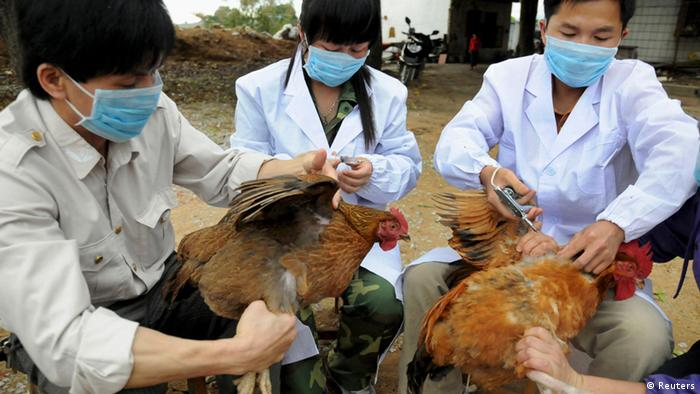 Veterinärmediziner impfen Hühner gegen den H5N1 Virus im Kreis Shangsi in der chinesischen autonomen Region Guangxi Zhuang. (Foto: REUTERS/China Daily)