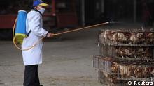 An employee wearing a protection suit sprays disinfectant on chickens at a poultry market in Hefei, Anhui province April 5, 2013. Chinese authorities were slaughtering birds at a poultry market in the financial hub Shanghai as the death toll from a new strain of bird flu mounted to six on Friday, spreading concern overseas and sparking a sell-off on Hong Kong's share market. According to Xinhua News Agency, east China's Zhejiang Province on Friday morning reported that a man has died from the H7N9 bird flu, bringing the death toll from the new deadly strain to six in the country. REUTERS/Stringer (CHINA - Tags: HEALTH DISASTER ANIMALS)