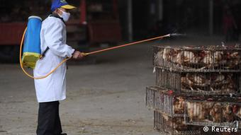 Vogelgrippe in China (Reuters)