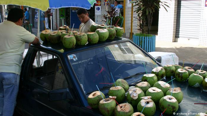 Kokosnüsse in Brasilien (picture-alliance/dpa)