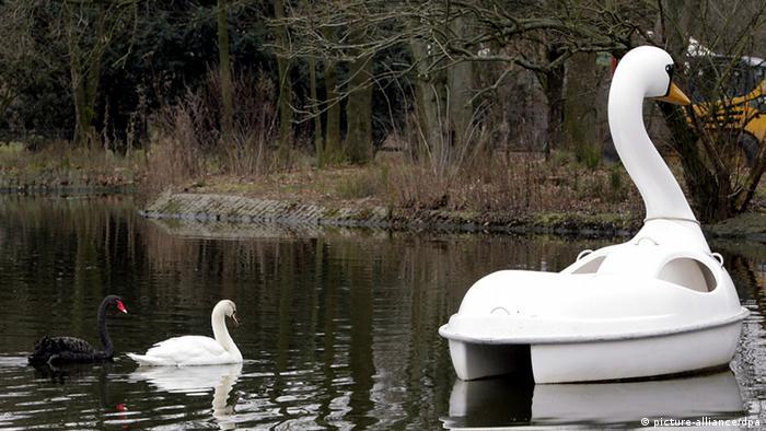 Ein dunkler und ein heller Schwan folgen einem großen Tretboot, das die Form eines Schwans hat