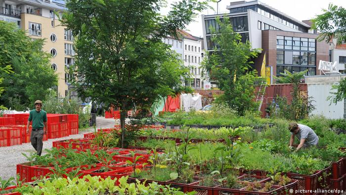 Prinzessinnengarten in Berlin (picture-alliance/dpa)