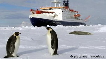Impressionen Antarktis Pinguine