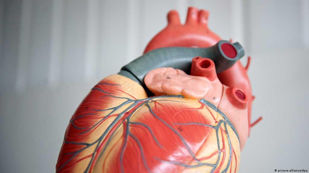 Técnica Que Adapta Coração De Porco Para Humanos é Estudada
