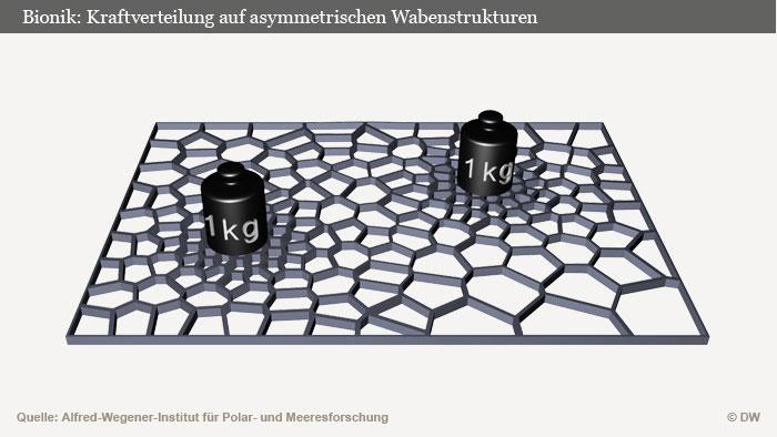 Bionik: Kraftverteilung auf asymetrischen Wabenstrukturen Infografik